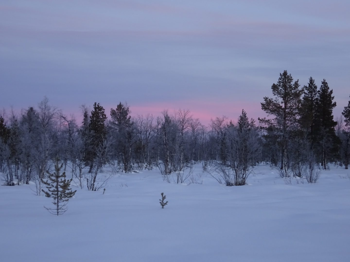 Winter Wonder Lapland